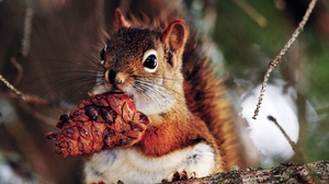 Preview wallpaper branches, food, nut, squirrel