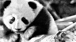Preview wallpaper black and white, color, face, panda