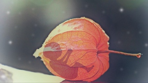 Preview wallpaper baby, bud, flower, physalis