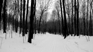 Preview wallpaper bw, forest, road, winter