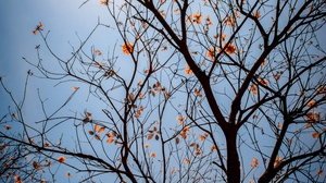 Preview wallpaper branches, flowers, leaves, sky, tree