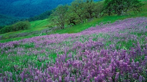 Preview wallpaper flowers, grass, green, lilac, mountains, slope