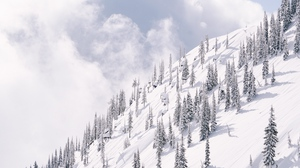 Preview wallpaper mountain, slope, snow, trees, winter