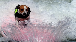 Preview wallpaper board, dogs, spray, wave