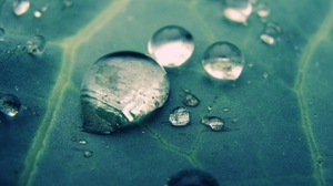 Preview wallpaper droplet, surface, veins