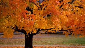 Preview wallpaper autumn, leaves, tree