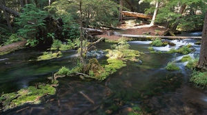 Preview wallpaper current, moss, river, trees, wood