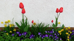 Preview wallpaper daffodils, flower, flowerbed, green, pansies, spring, tulips, wall
