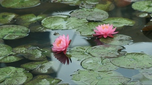 Preview wallpaper leaves, pond, water, water lilies
